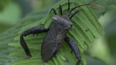 Beetle insect  - stock footage