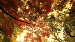 Stock Video Footage of Fall ARTCOLORED 01