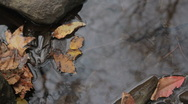 Stock Video Footage of Autumn leaves in water