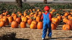 Pumpkin Patch (running boy) - stock footage
