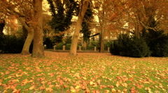 Stock Video Footage of Fall ARTCOLORED 02