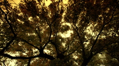 Stock Video Footage of Fall ARTCOLORED 04