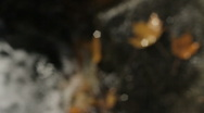 Autumn leaves on creek rock Stock Footage