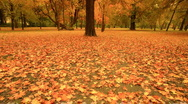 Stock Video Footage of Fall ARTCOLORED 05