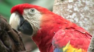 Stock Video Footage of Macaw wings