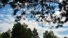 HD Time lapse of blue sky with cumulus clouds and trees Stock Footage