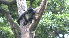 Monkey jungle  - stock footage