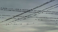 Birds On Wire Crossing Stock Footage