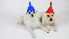 Dogs Wear Funny Colorful Cone Hats  - stock footage