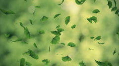 Falling gingko foliage loop - stock footage