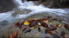 Autumn River Stock Footage