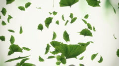 Falling ginko leaves - loopable - stock footage