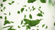 Falling ginko leaves - loopable Stock Footage