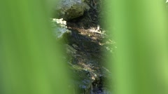 jungle river - stock footage