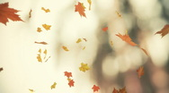 Autumn backgrounds Stock Footage