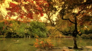 Stock Video Footage of Japanese Garden Fall ARTCOLORED 01