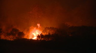 Forest fire by night Stock Footage