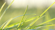 Wind moves green grass leaves - zooming background Stock Footage