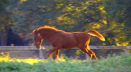 Foal playing Stock Footage