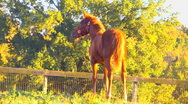 Foal playing 02 Stock Footage