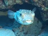 Underwater diving video Stock Footage
