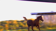 Foal playing 03 Stock Footage