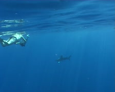 shark atack Underwater video Egypt red sea - stock footage