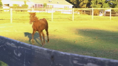 Foal plays with mare Stock Footage