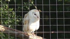 Owl in cage Stock Footage