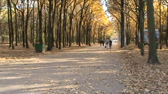 In a park  Stock Footage