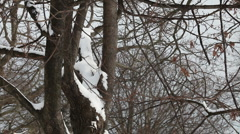 Snow on Tree Branches - stock footage
