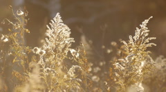 autumn leaves and grasses 4 - stock footage
