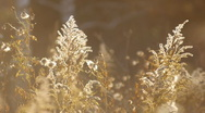 Autumn leaves and grasses 4 Stock Footage