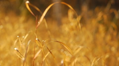 autumn leaves and grasses 12 - stock footage