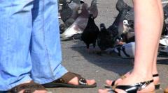 HD Pigeons feeding on sidewalk and couple talking - stock footage