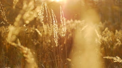 Autumn leaves and grasses 15 Stock Footage