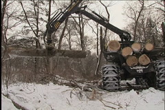 Woodcutter,  tractor Stock Footage