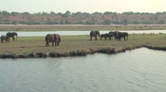 Herd of Elephants in Chobe - stock footage