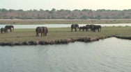 Stock Video Footage of Herd of Elephants in Chobe