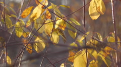 autumn leaves and grasses 19 - stock footage