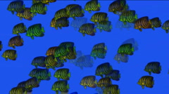 Aquarium fish underwater sea ocean fishing ecology biological background. Stock Footage