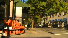 Pumpkins in Central Park west Stock Footage