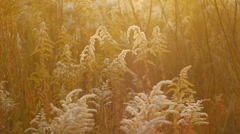 Autumn leaves and grasses 21 Stock Footage