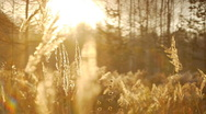Stock Video Footage of autumn leaves and grasses 6