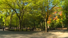 The mall, Central Park, New York City,  autumn, trees turning Stock Footage