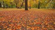 Fall 05 Stock Footage