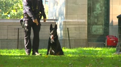 Crime and justice, Police and canine training, dog waits for instructions Stock Footage