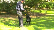 Crime and justice, Police and canine training, dog retrieving ball, follow shot Stock Footage
