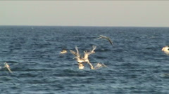 Gulls and sea Stock Footage