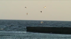 gulls above a pier - stock footage